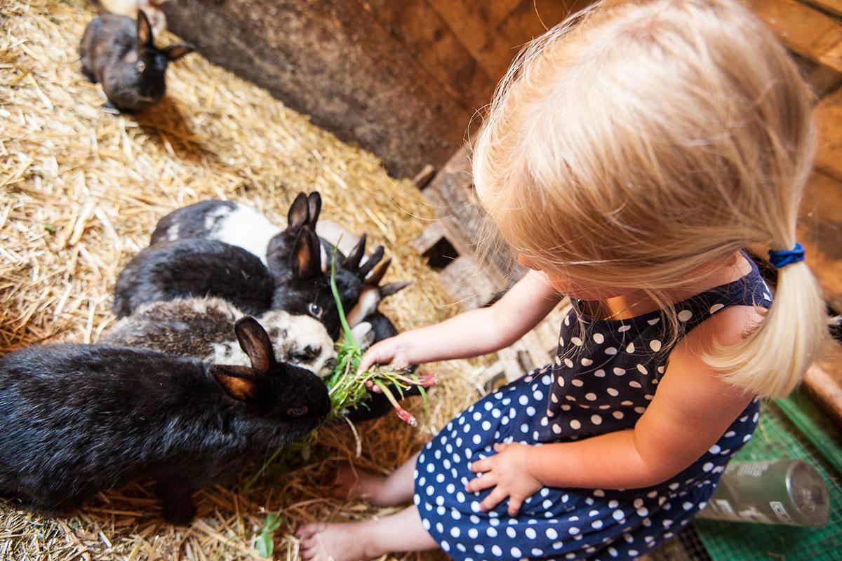 Streicheltiere - Urlaub am Bauernhof im Salzburger Land